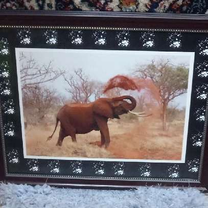 Elephant Picture in the Jungle