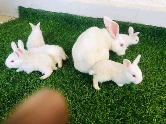 Rabbits pets for your home garden