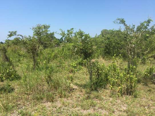 FARMLAND FOR SALE AT BUMA IN BAGAMOYO TOWN image 2