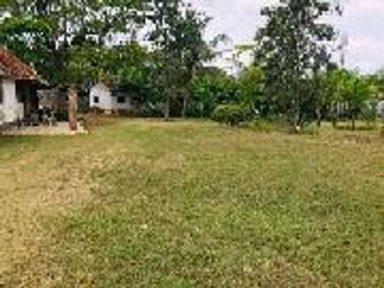 5000 Sqm  Big Plot in Oyster by Center image 6