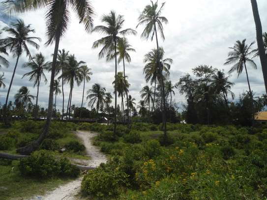 5,668 sqm OCEANFRONT LAND AT MATEMWE VILLAGE-ZANZIBAR ISLAND image 3