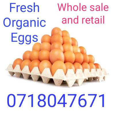 Organic eggs for sale