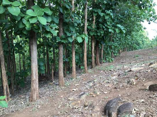 40acre of tree mitik for sale at tanga tsh 500,000 for quibiq image 1