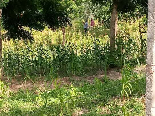 plot for sale at goba contena image 2