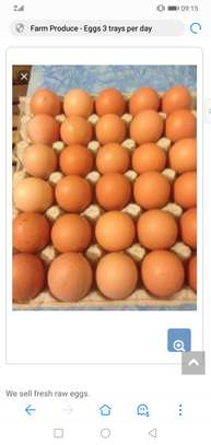 Fresh Eggs 3 Trays