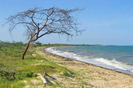 3 Acres Beach Plot  for Sale, Pangani - Tanga image 3