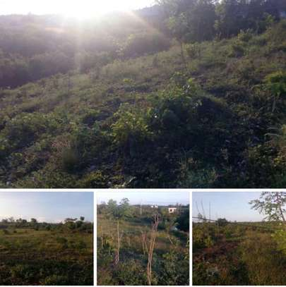 20000 Sqm Farm land in Zanzibar Island image 2