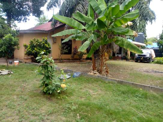 4 bed room big house with nice garden at mikocheni image 5
