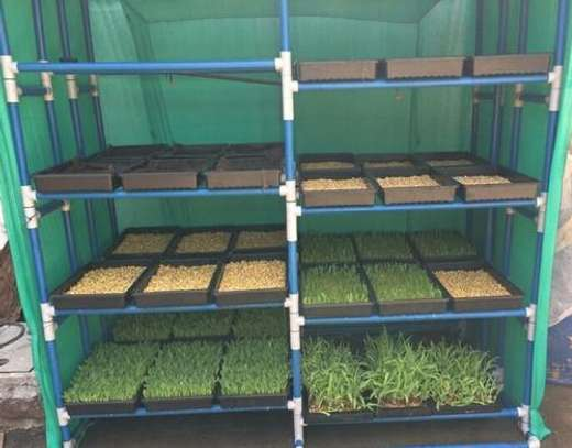 Hydroponic Fodder Cage(House) image 1