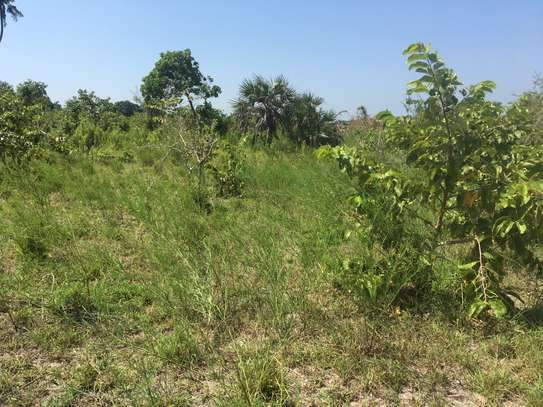 FARMLAND FOR SALE AT BUMA IN BAGAMOYO TOWN image 3