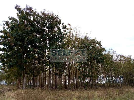 2600 Teak Trees At Morogoro Region