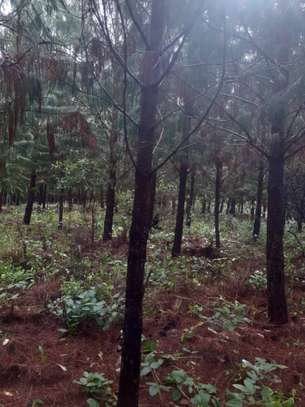 80 Acres of Trees Farm for Outright Sale at Mafinga image 1
