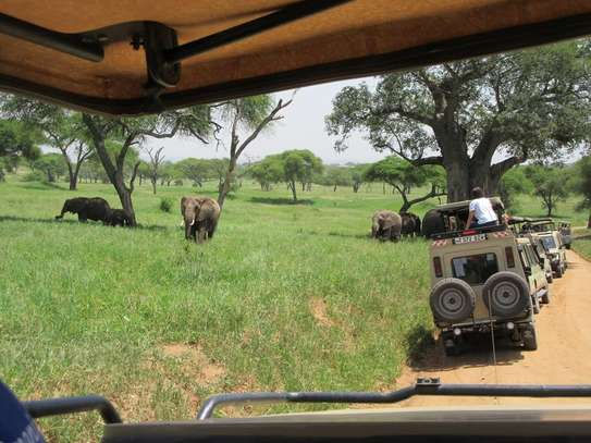 5 Days Tanzania Budget Camping Safari