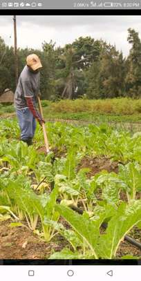 250 Acres Farm in Mkuranga pagai, with clean tittle deed. image 2