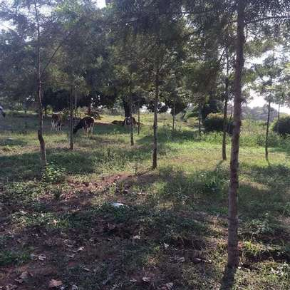23 ACRES PRODUCTIVE FARMLAND ON SALE AT LOW PRICE.