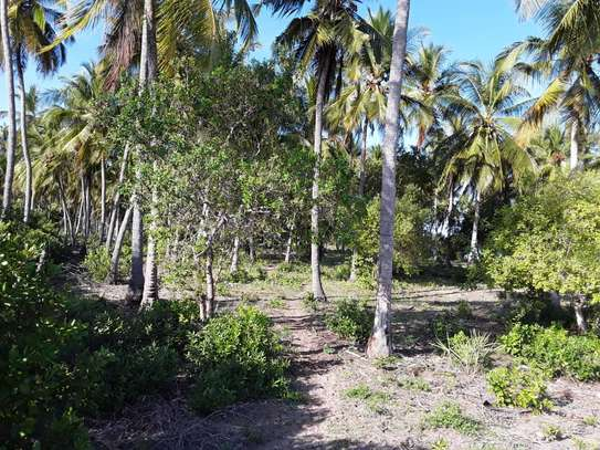 OCEANFRONT LAND FOR SALE IN TANGA CITY image 7