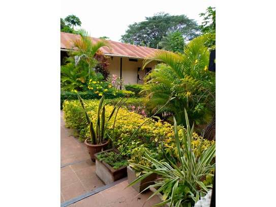 3 Bedroom House with botanic like zoo  garden for rent $2500 at oyster bay image 8