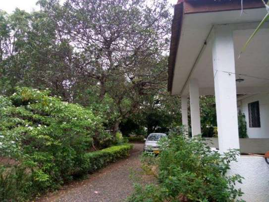 4bed house at oyster bay $2000pm z image 4