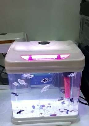 Four (04) Litres Fish Tank with LED Light, Filter, Fish