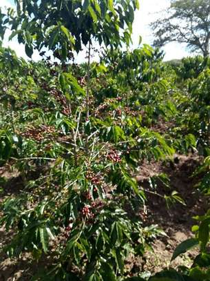Shamba linauzwa Momba 500 ekas/Farm for sale at Momba 500 ekas image 1