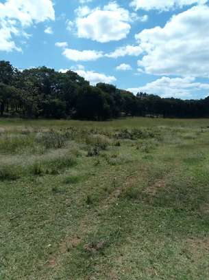 Shamba linauzwa Momba 500 ekas/Farm for sale at Momba 500 ekas image 3