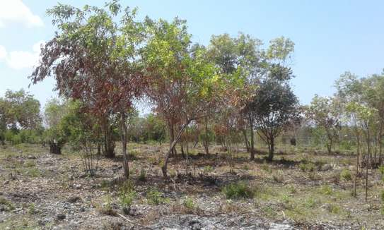 Kizimkazini Zanzibar , we are selling a land which is in a business tourism area, 12minute walking to the beach.