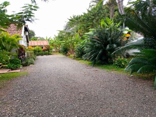 3 Bedroom House with botanic like zoo  garden for rent $2500 at oyster bay image 13