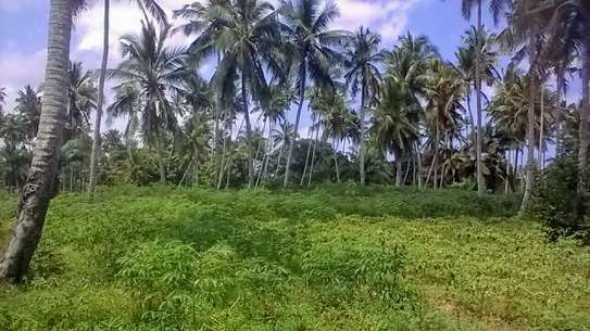 6 ACRES FARM FOR SALE IN ZANZIBAR ISLAND