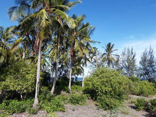 OCEANFRONT LAND FOR SALE IN TANGA CITY image 3