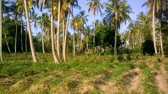 LAND FOR SALE NEAR THE OCEAN IN ZANZIBAR ISLAND
