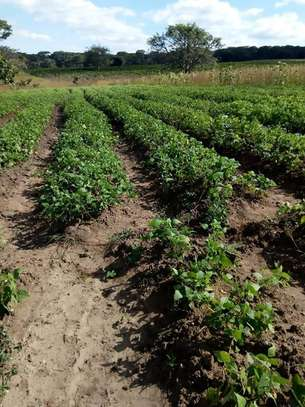 Shamba linauzwa Momba 500 ekas/Farm for sale at Momba 500 ekas image 2