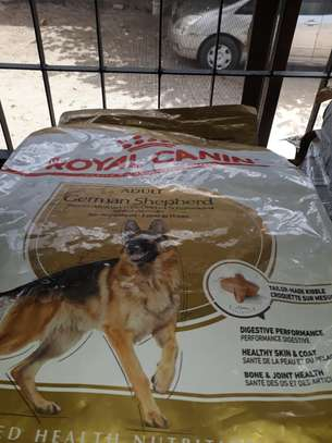 DogMeal for best Price