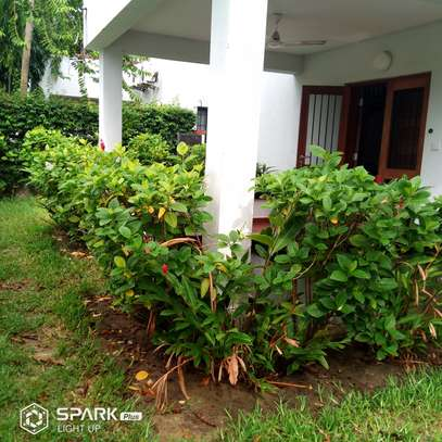 4Bedroom Villa to Let in Oysterbay image 5