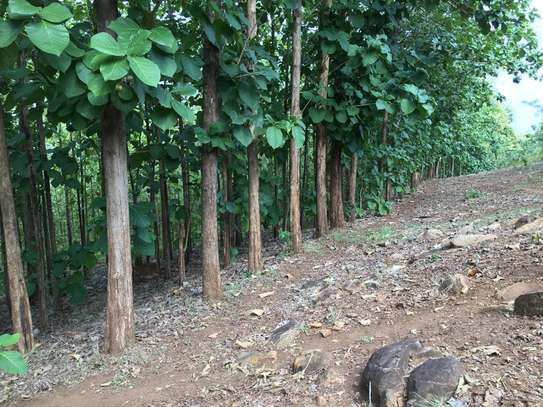 40acre of tree mitik for sale at tanga tsh 500,000 for quibiq image 3
