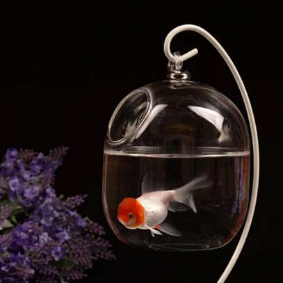 Beautiful hanging fishbowl / Tank dogo la samaki