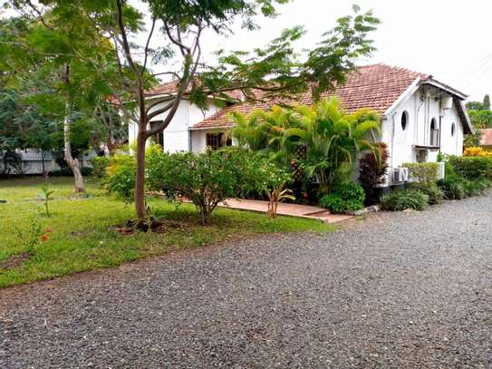3 Bedroom House with botanic like zoo  garden for rent $2500 at oyster bay image 14
