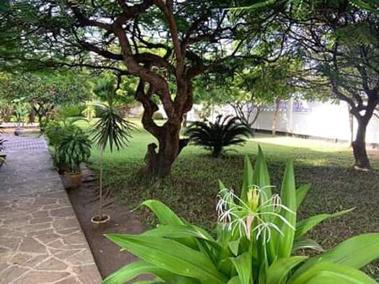 big garden 4bed house at oyster bay along toure drive near coco beach $5500pm image 2