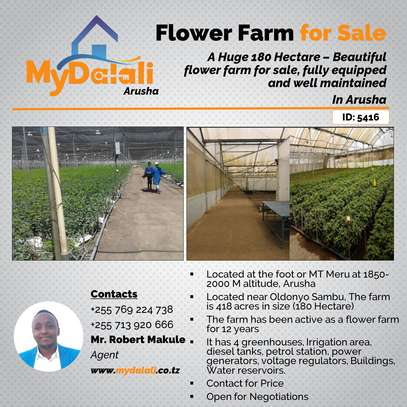 445 Acres ( 180 Hectares) Flower Farm in Arusha