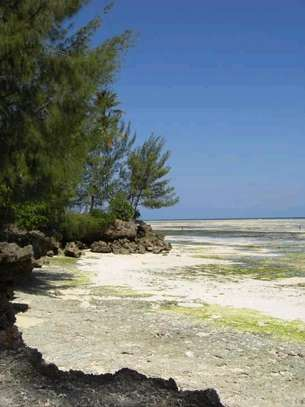 31970 Sqm Private Beach Land in Kizimkazi for 7.9 acre Can Also be Sold per Acre