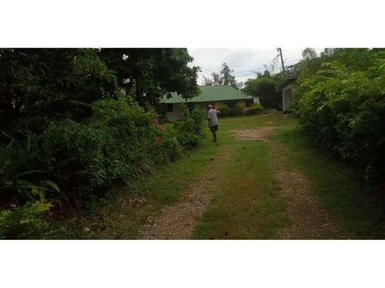 4 bed big house for rent at masaki $1500 image 3