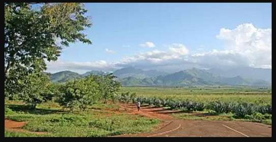 MOROGORO LARGE SIZE LAND AT GOOD LOCATION AT VERY LOW PRICE FOR SALE image 9
