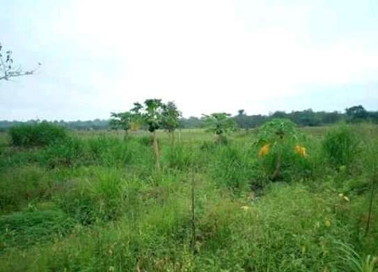 250 Acres Farm in Mkuranga pagai, with clean tittle deed. image 3