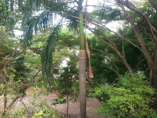4 Bedrooms Villa In A Leafy Compound In Masaki For Rent image 10