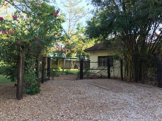 4 bed room house for rent at oyster bay $1500pm image 3