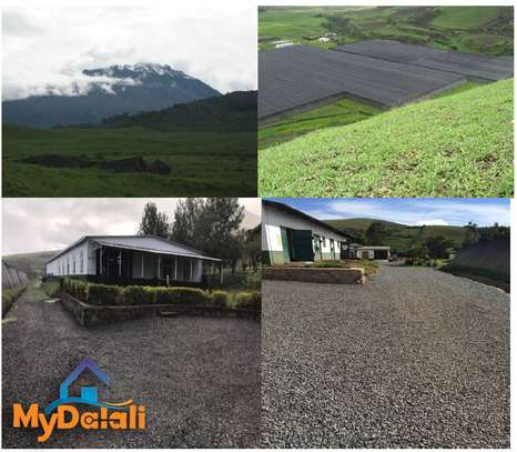 445 Acres ( 180 Hectares) Flower Farm in Arusha image 9