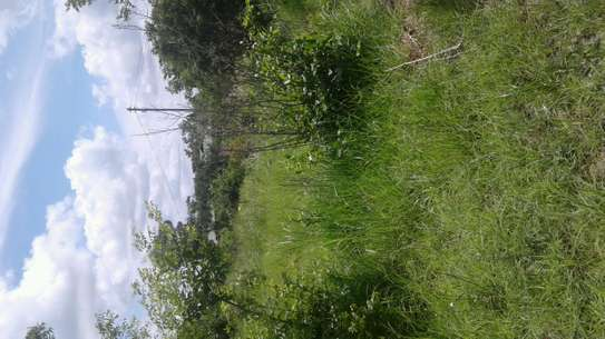 PLOT FOR SALE  MAILIMOJA B
