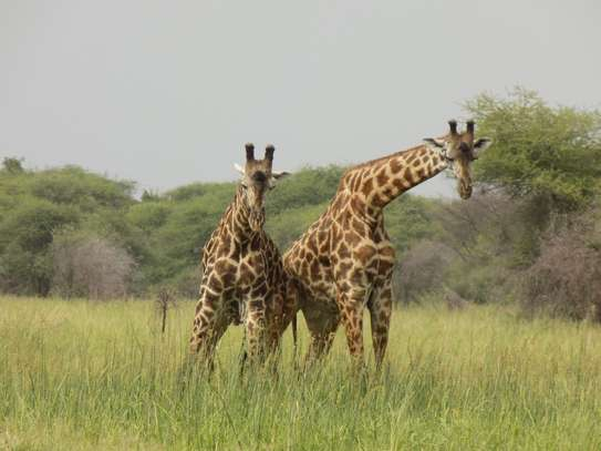 4 Days Best of Tanzania Safari image 2