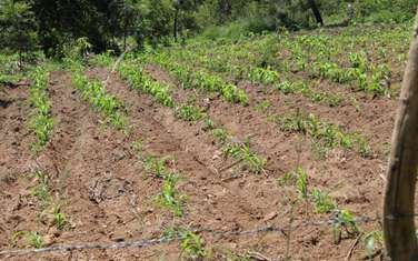 50100 ac land for sale in Thika