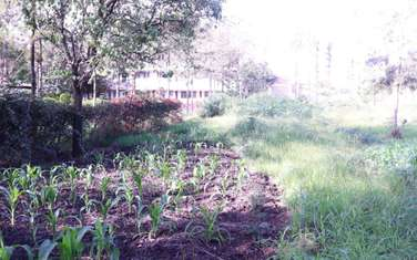 350 m² commercial land for sale in Ruiru