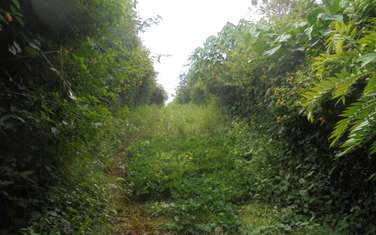 4043 m² residential land for sale in Runda